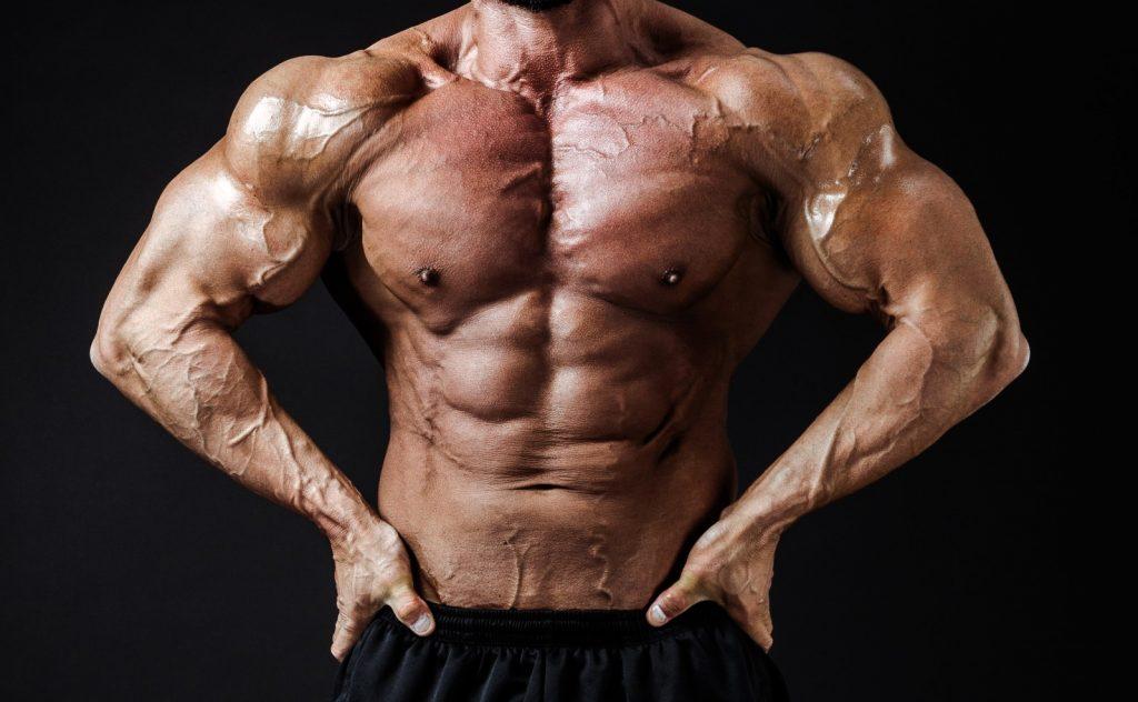大きな筋肉